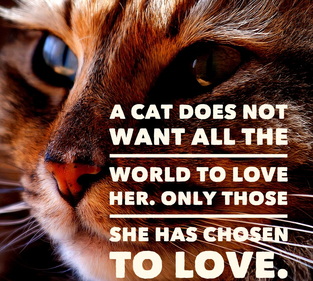 Quotes About Cat Lovers