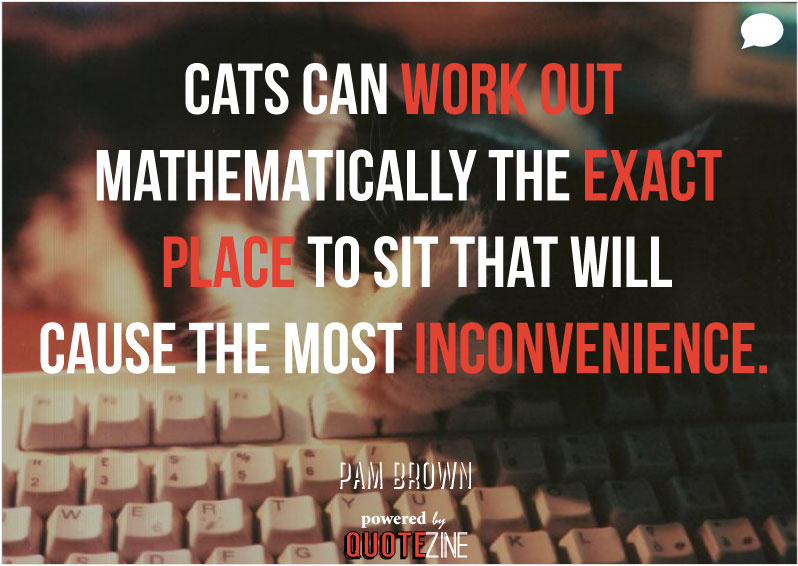 Funny Quotes About Cat Lovers : Cat Quotes: 25 Sayings Only Cat Lovers will Understand: