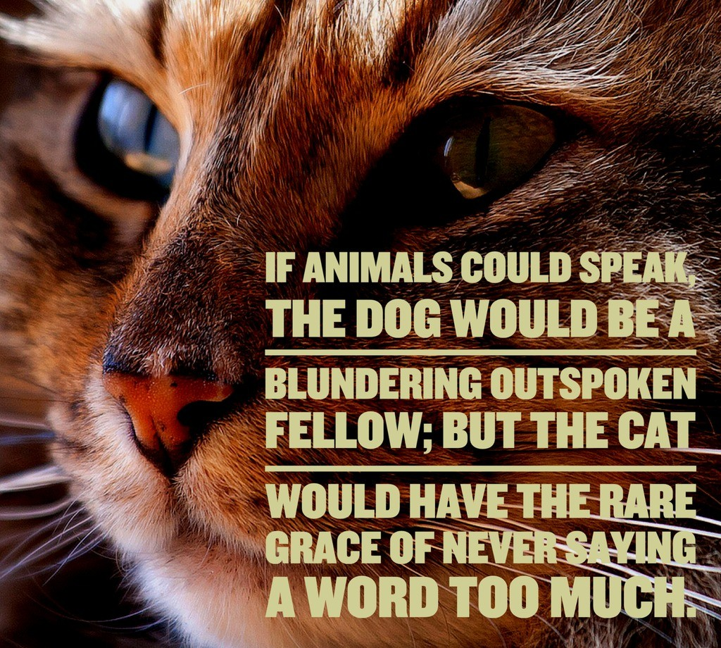 Cat Quotes: 25 Sayings Only Cat Lovers Will Understand: